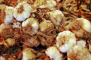 pic garlic