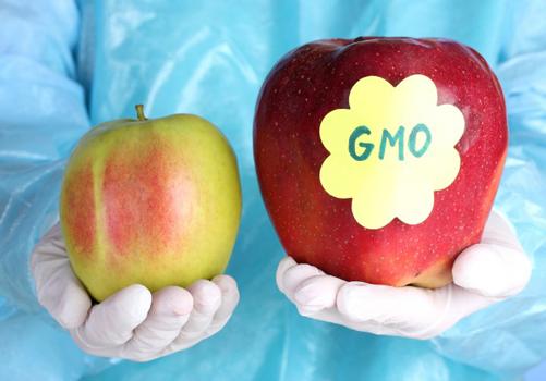 GMO 4